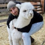 Alpacas and the art of kindness
