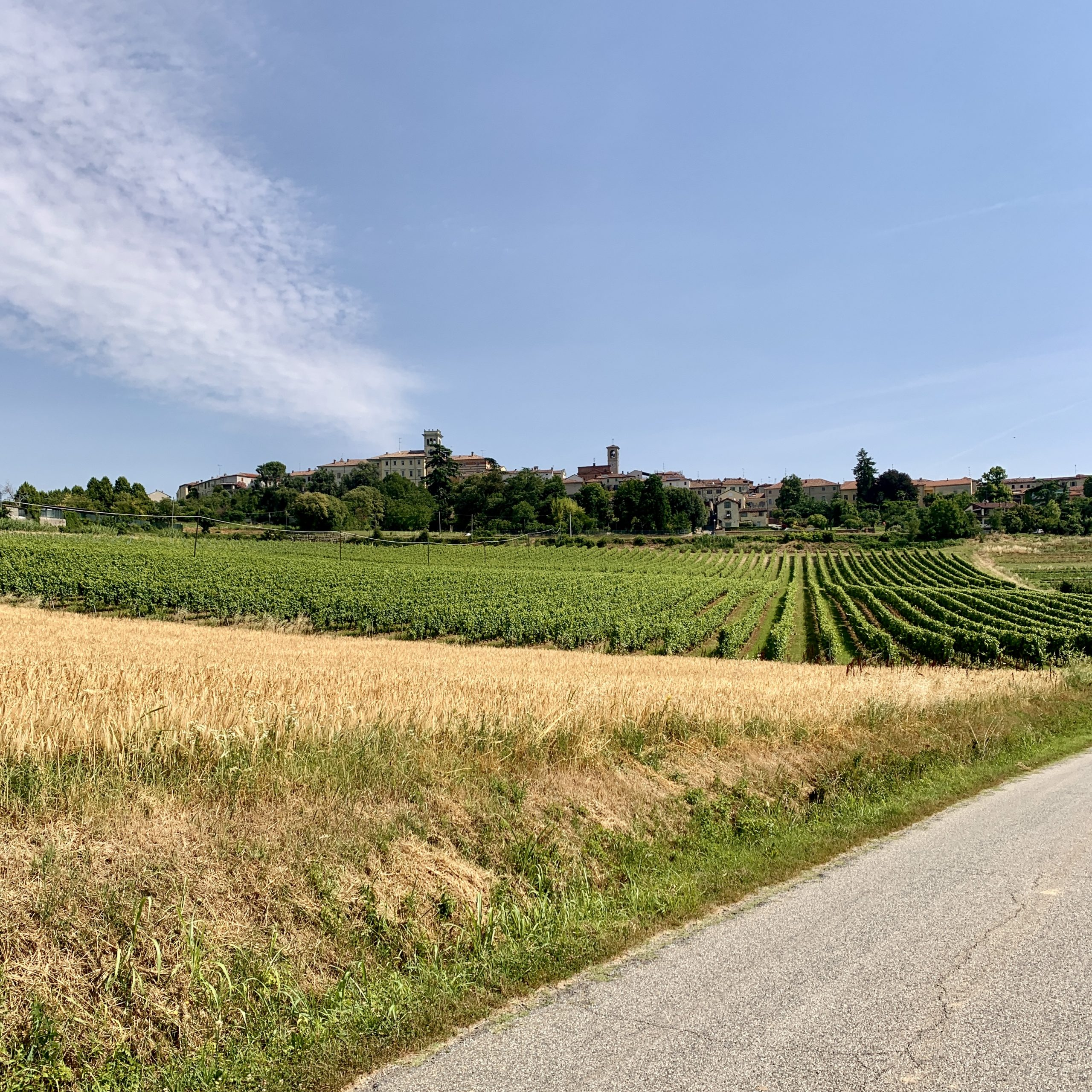 Cella Monte and its vineyards